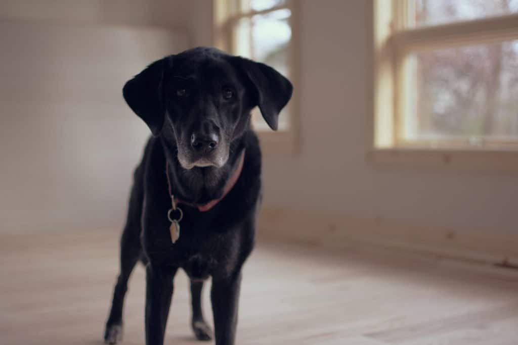 Dog in empty house - We Buy Any Home UK